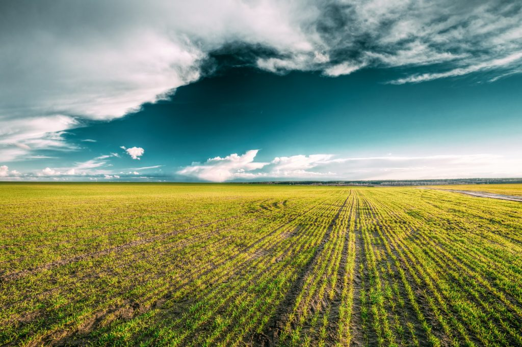 Green Field In Spring. Agricultural Landscape